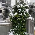 雪景色♪ーその2
