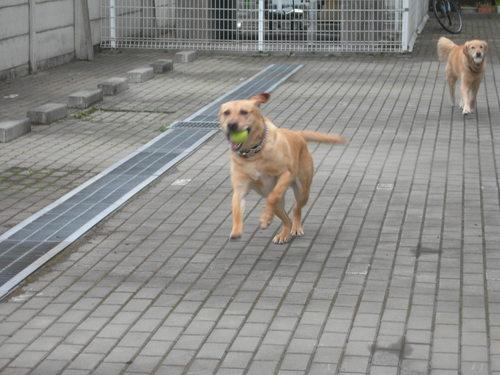 Run,Run,Run!!!